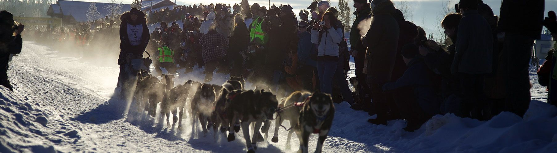 Dog Sled Race Image